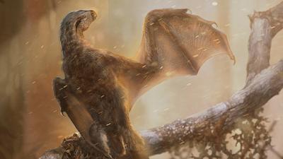 [Image: Ambopteryx_longibrachium-novataxa_2019-W...Cheung.png]