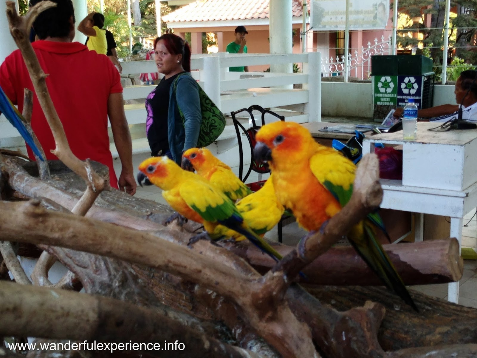 Family of parrot