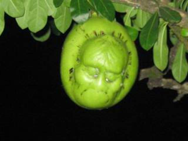 buah seperti kepala manusia-2