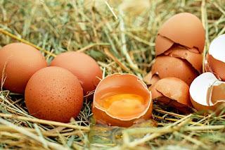 Duluan Ayam atau Duluan Telur?