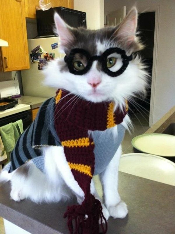 funny cat dressed up - photo #30