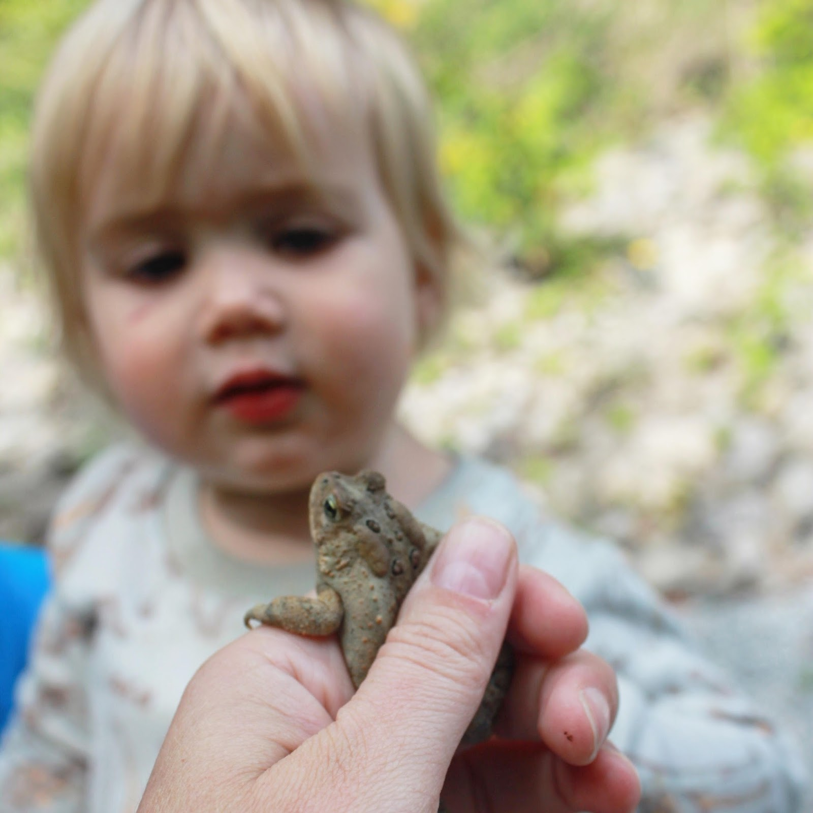 Toddler with American Toad