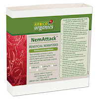 Steinernema riobrave beneficial nematodes for turf and citrus pest control