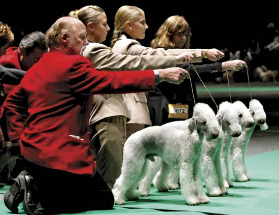 Funny Animals Pictures: Dog Show