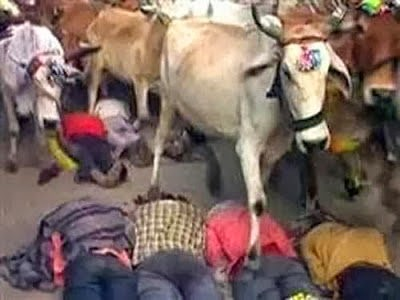 Indian men trampled by cow at Ujjain