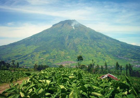 Gunung Sumbing Tinggi (3.371 m )