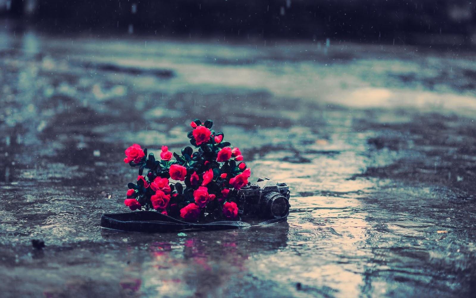 Kumpulan Dp Bbm Lucu Ketika Hujan Dp Bbm Lucu Untuk Hari Ini