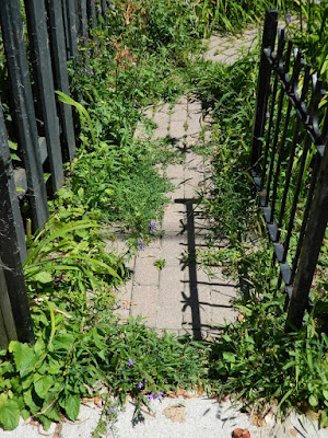 Toronto Leslieville Front Garden Summer Cleanup Before by Paul Jung Gardening Services--a Toronto Gardening Company