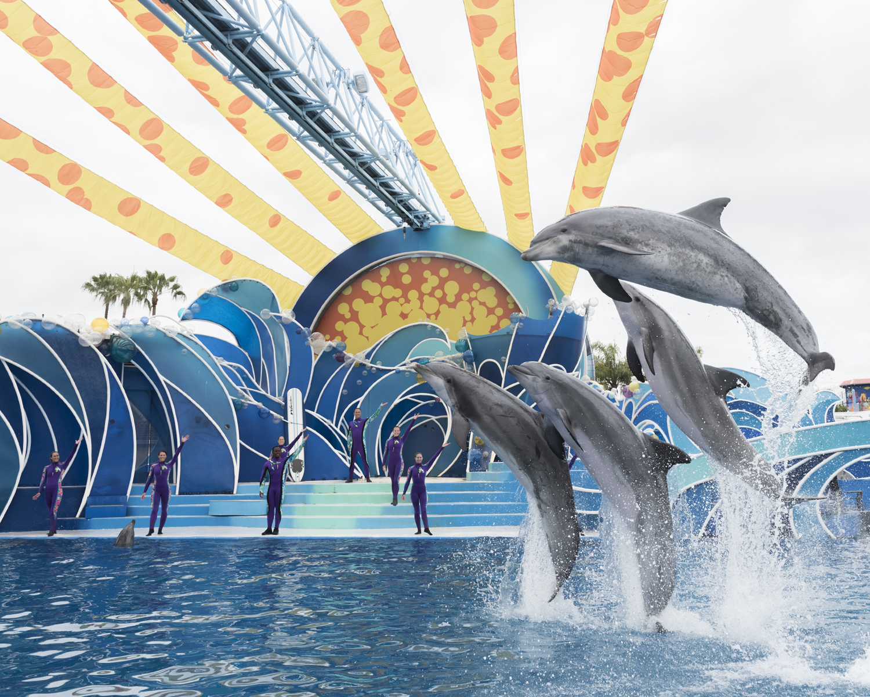 THE DOLPHIN DAYS - SeaWorld Orlando