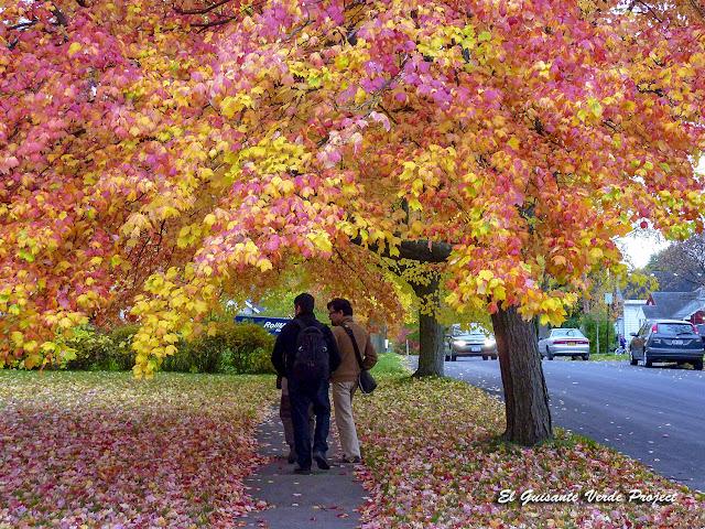 Otoño en Syracuse, NY por El Guisante Verde Project