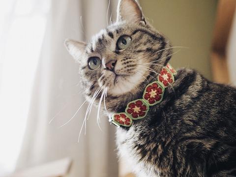 アフリカンフラワーモチーフの首輪をつけたキジトラ猫