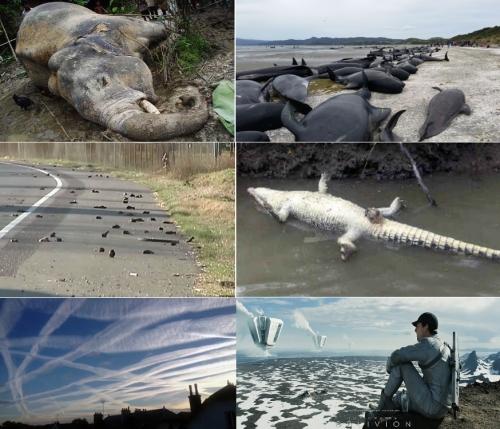 Фауна вымирает в 1000 раз быстрее, чем ожидалось