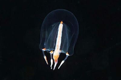fotos bajo el agua de Alexander semenov