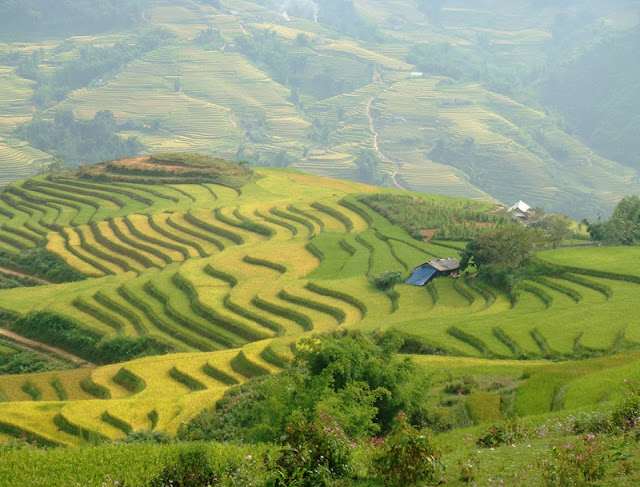 Top Ideal Places To See Amazing Rice Terraced In Northern Vietnam 3
