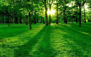 Most Beautiful Green HD Wallpaper For IPhone Desktop Tab And All Smartphone