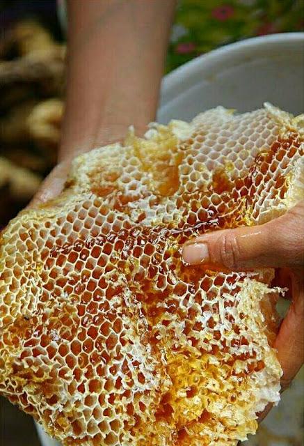 Mật ong rừng an lão bình định