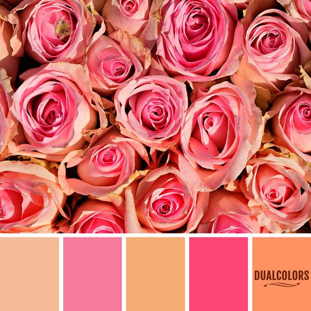 color_paleta_183