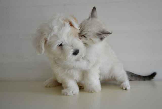 3 Contoh Teks Deskripsi Tentang Kucing Dalam Bahasa