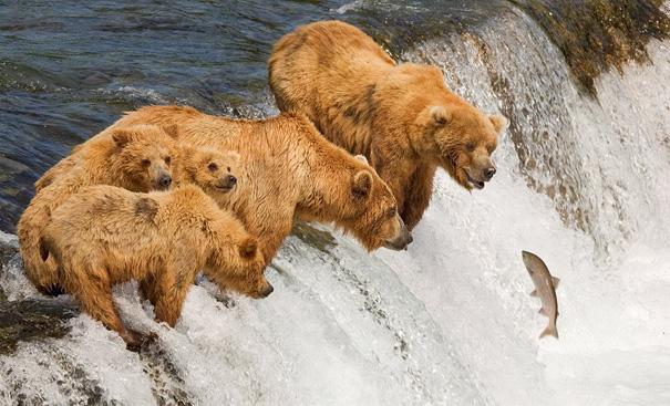 50 animais incríveis fotografados no momento perfeito