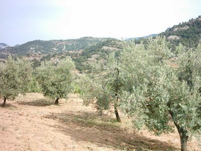 La pileta, camino, pantano de Pena, embalse, finca, almendros, olivos 18
