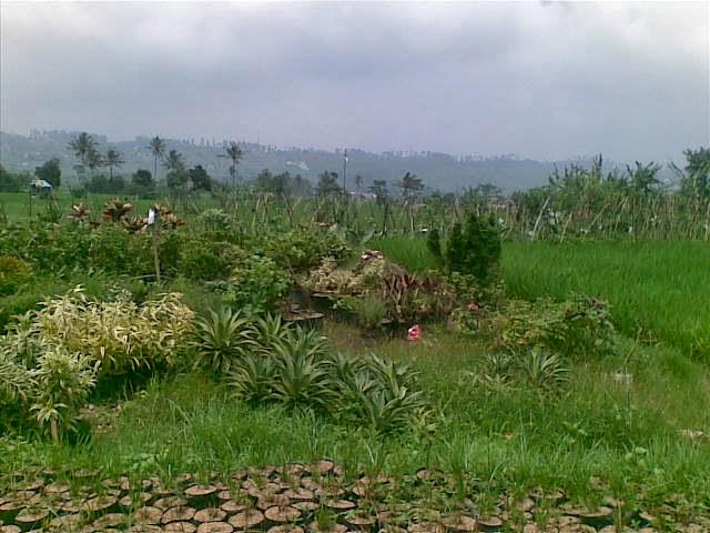 Foto(4993) Jual Tanah Milik Dekat Puncak Luas 24.000 m2 / 2,4 Ha jual tanah di kota bunga jual tanah di puncak jual tanah di taman bunga nusantara
