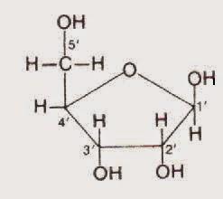 ORIGINE DELLA VITA E CHIMICA PREBIOTICA: RNA: its