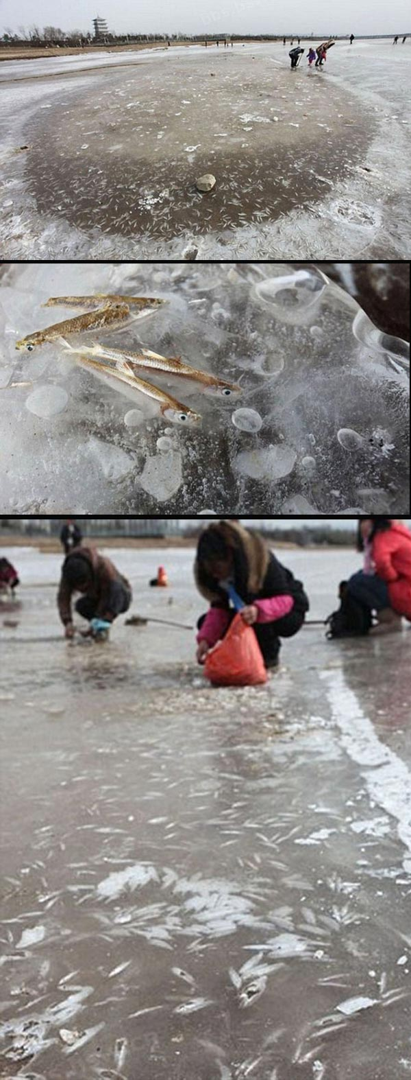 COOL : Cara Menangkap Ikan Ketika Musim Sejuk Di China