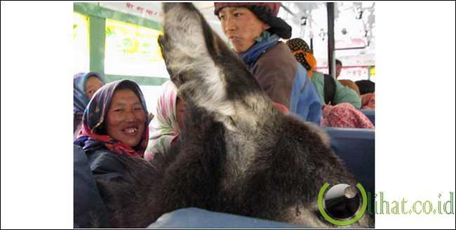 Binatang dalam bus