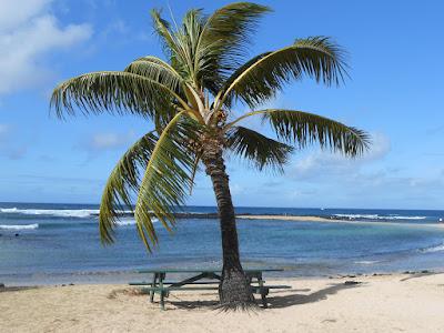 Image result for sos aloha beaches