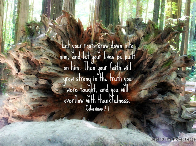 bible verse, inspiration, God's Word, roots, redwoods, faith, truth, https://bec4-beyondthepicketfence.blogspot.com/2016/08/sunday-verses_28.html