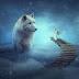 Making of Fantasy Big Wolf Photo Manipulation Scene Effect In Photoshop