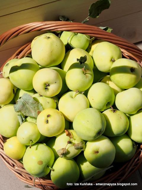 odmiana jablek, papierowka, owoce, kiszone jablka, kiszone papierowki, jabluszka, od sasiadki, najlepsze