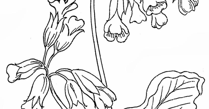 Disegni Di Rose Da Stampare E Colorare Gratis: Disegni Da Colorare Di Fiori