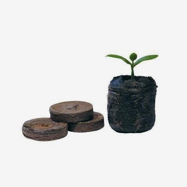 GrowPlant Cultivo Indoor: Clonagem De Plantas Com Sela Gel