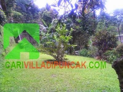 Halaman Villa luas