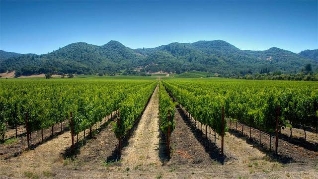 Visitar as vinícolas em Santiago no mês de janeiro