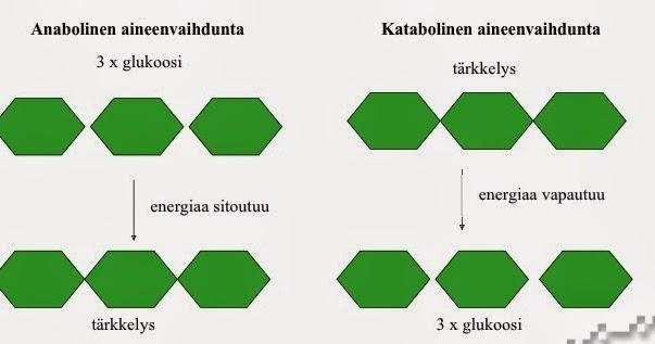 Proteiinimolekyyli