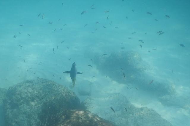 Gardner Bay underwater