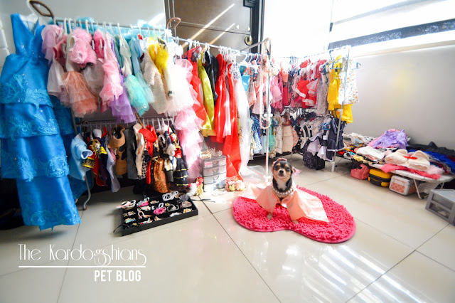 A Tour at the Infamous Closet of Khaleesi the Diva and Where to Buy Pet Clothes