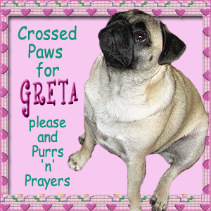 Hugs and Purrs to Greta and Family