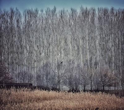 Boscos al voltant de l'estany de Sils
