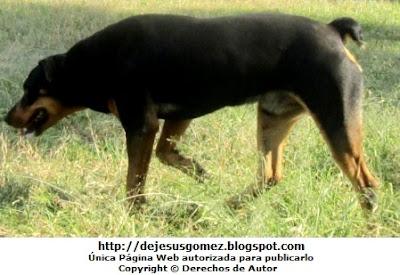 Foto de perro caminando de Jesus Gómez