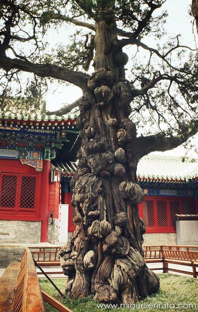 Árbol-Templo-Confucio