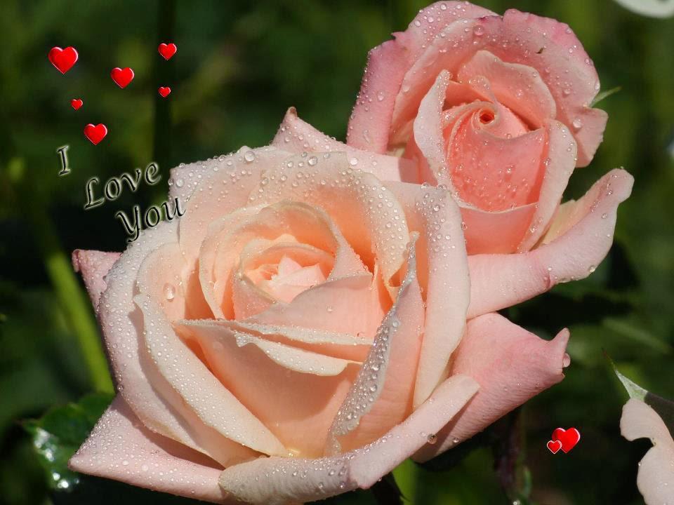 love u nice image