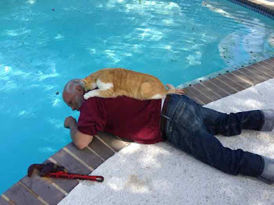 10 Adorable Photos Of Cat Dads And Their Kitties