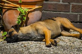 Getreidefreies Hundefutter Hiquaso - Monatsabo