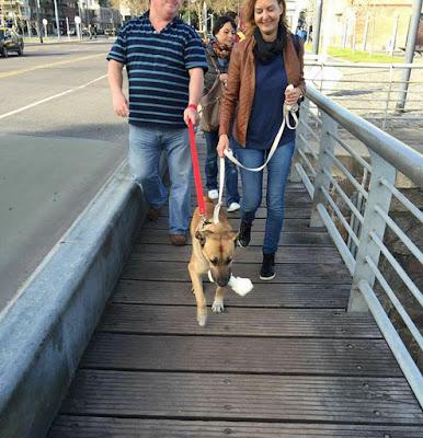 υιοθεσία σκύλου αδέσποτο σκυλί