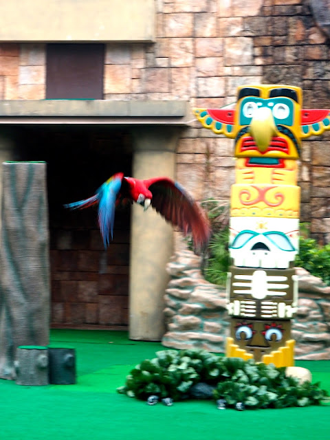 Scarlet macaw parrot in flight during the bird show at Ocean Park, Hong Kong