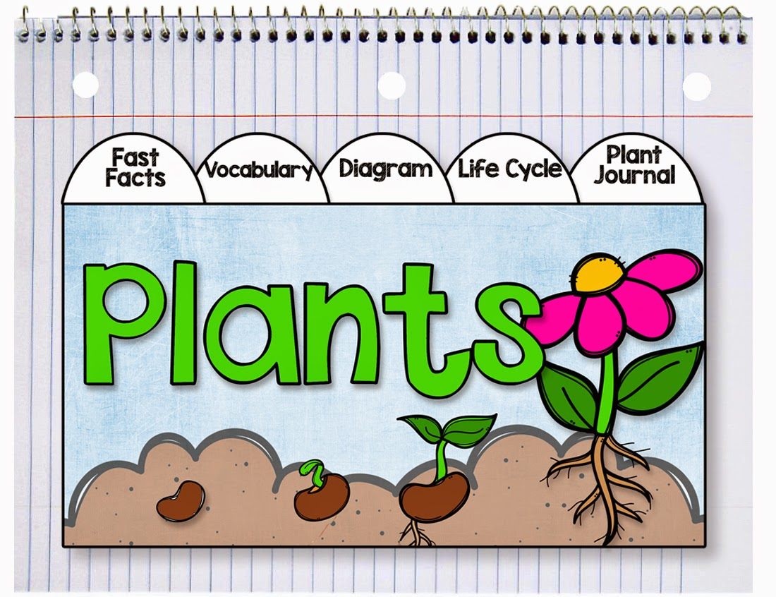 sunflower plant life cycle diagram judaism christianity and islam venn primary chalkboard it 39s planting time