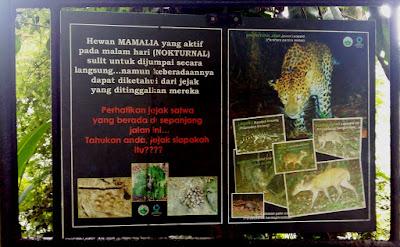 Macan Tutul salah satu hewan di kawasan Hutan Bodogol
